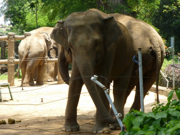 elephants-zoo-hcmc