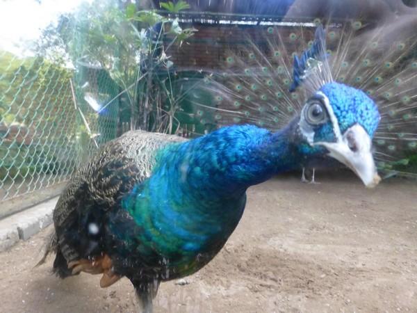 paon-zoo-hcmc
