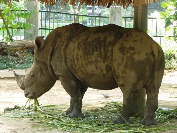 rhinoceros-zoo-hcmc