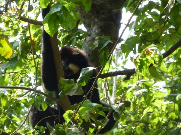 singe-dans-arbre