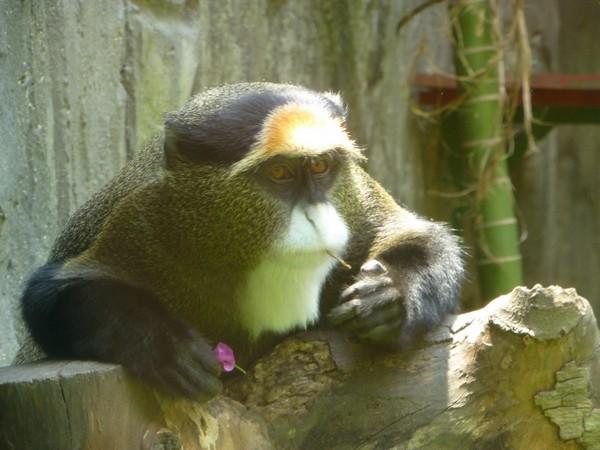 singe-zoo-hcmc