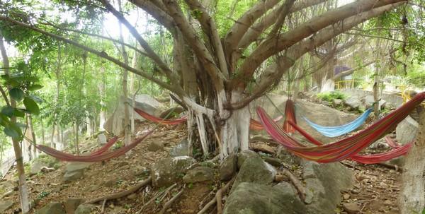arbre-a-hamacs