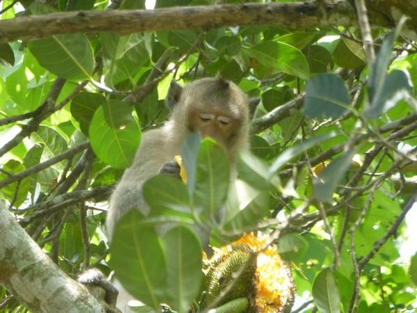 singe-dans-un-arbre
