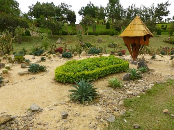 cactus-jardin-des-fleurs