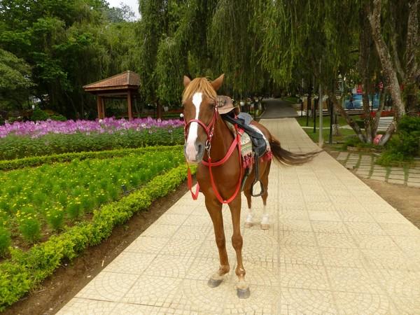 cheval-jardin-des-fleurs