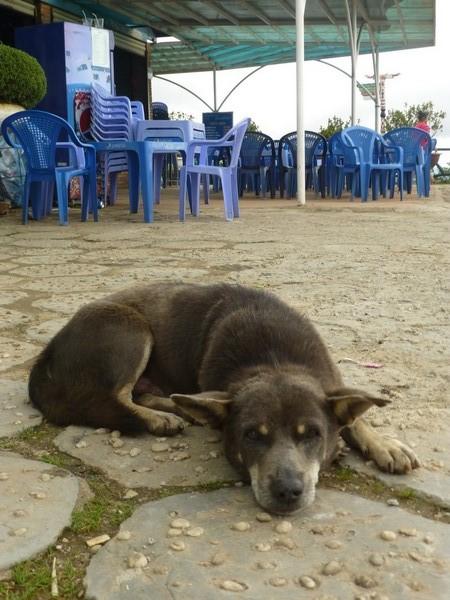 chien-fatigue