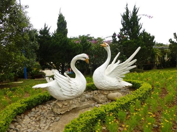 cygnes-jardin-des-fleurs